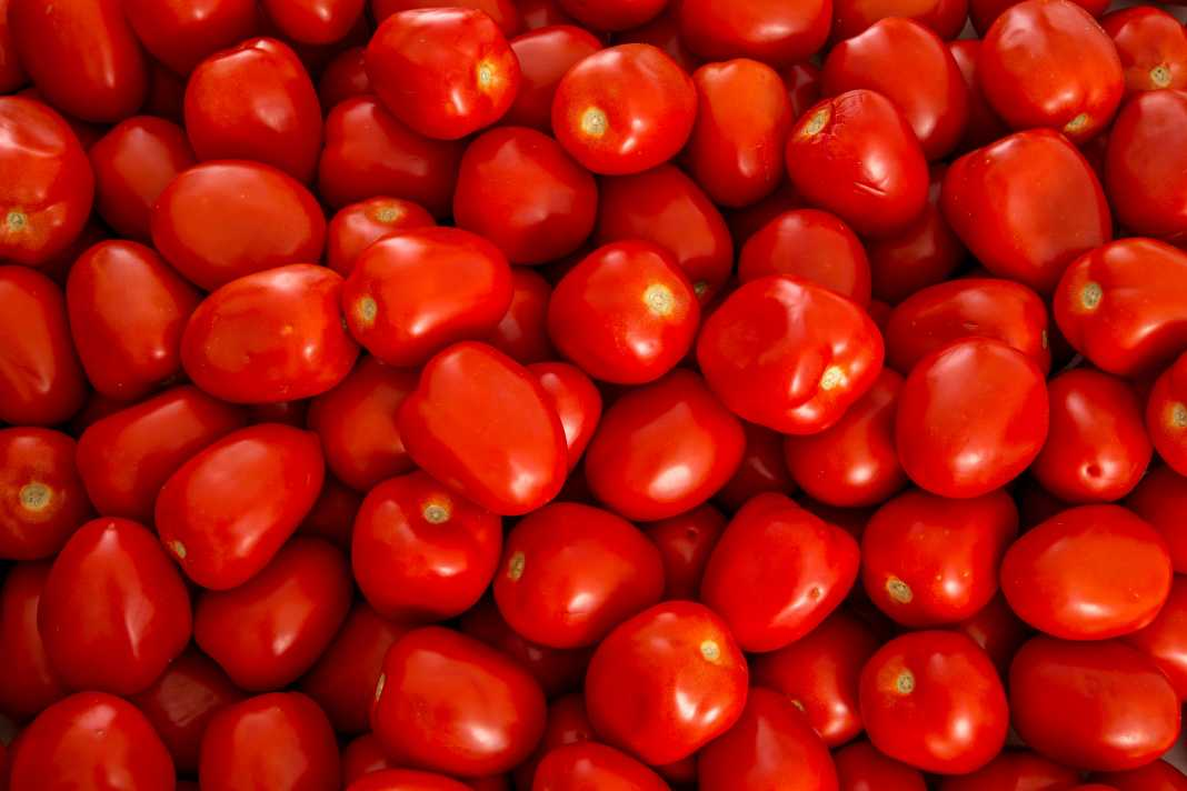 Suspenderá EU aranceles al tomate de México
