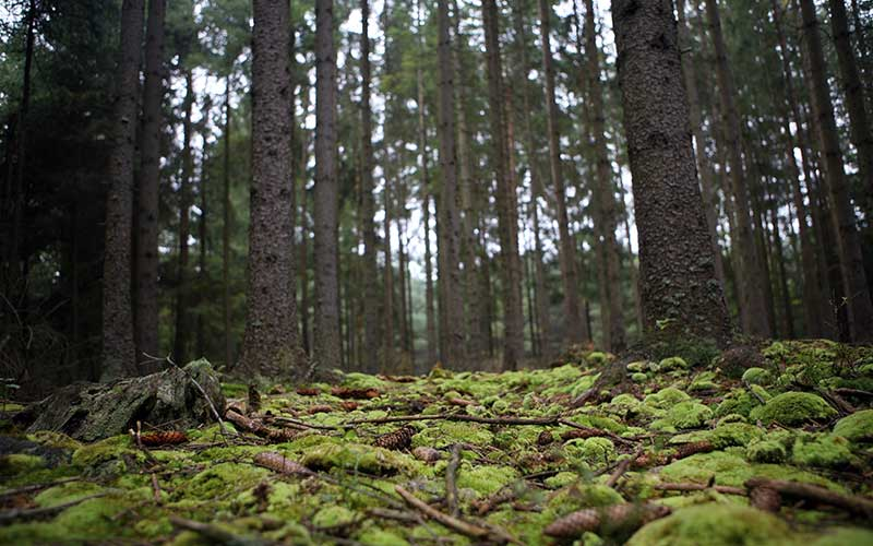 """Reforma ambiental de Silvano """"privatiza"""" áreas naturales protegidas"""