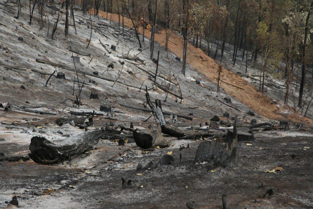Culpan a fumadores de incendios forestales en Michoacán