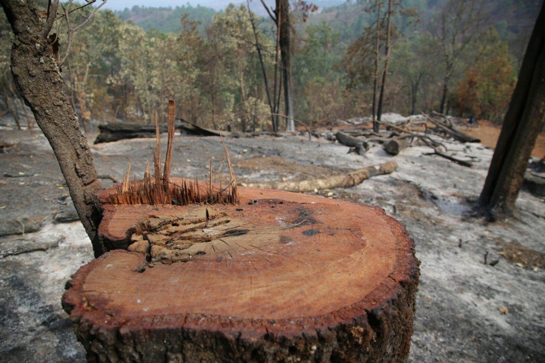 Más de 3 mil hectáreas siniestradas por incendios forestales en Michoacán