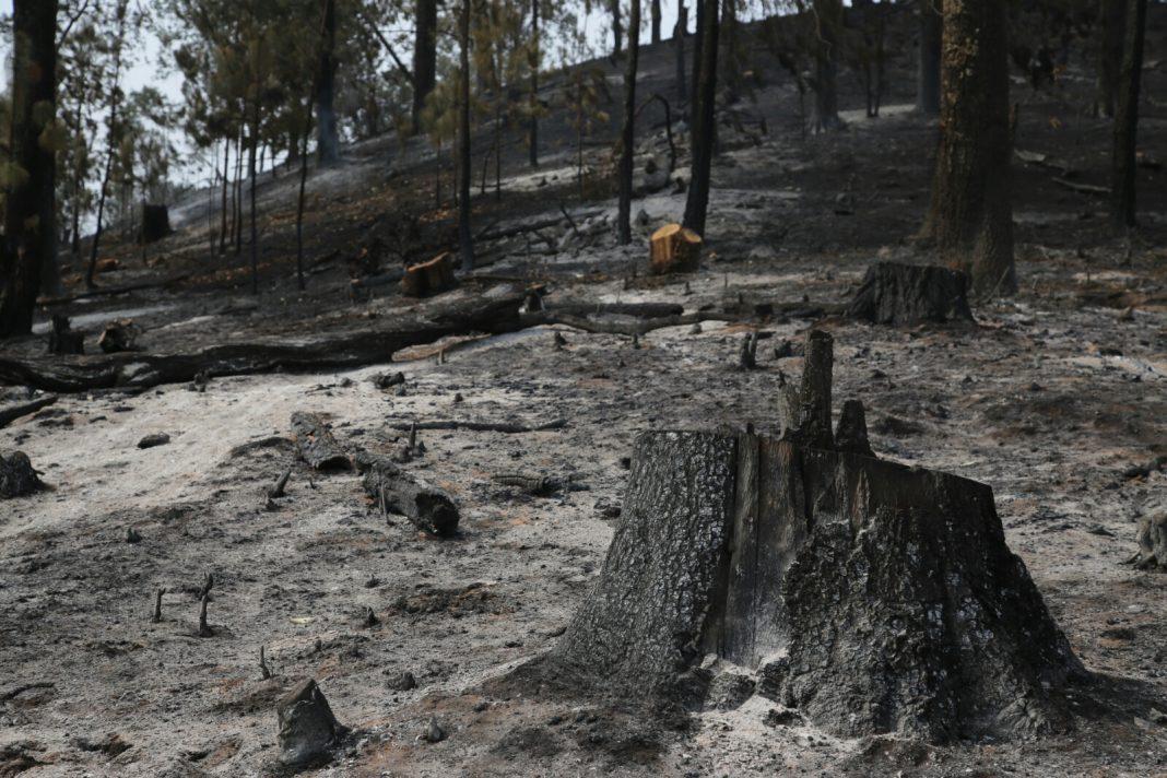 Lanzarán Campaña Nacional contra Incendios Forestales