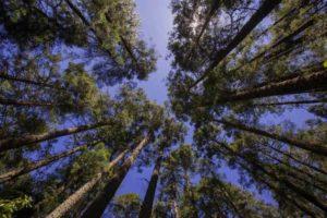Sin registro de aumento de tala ilegal en Michoacán