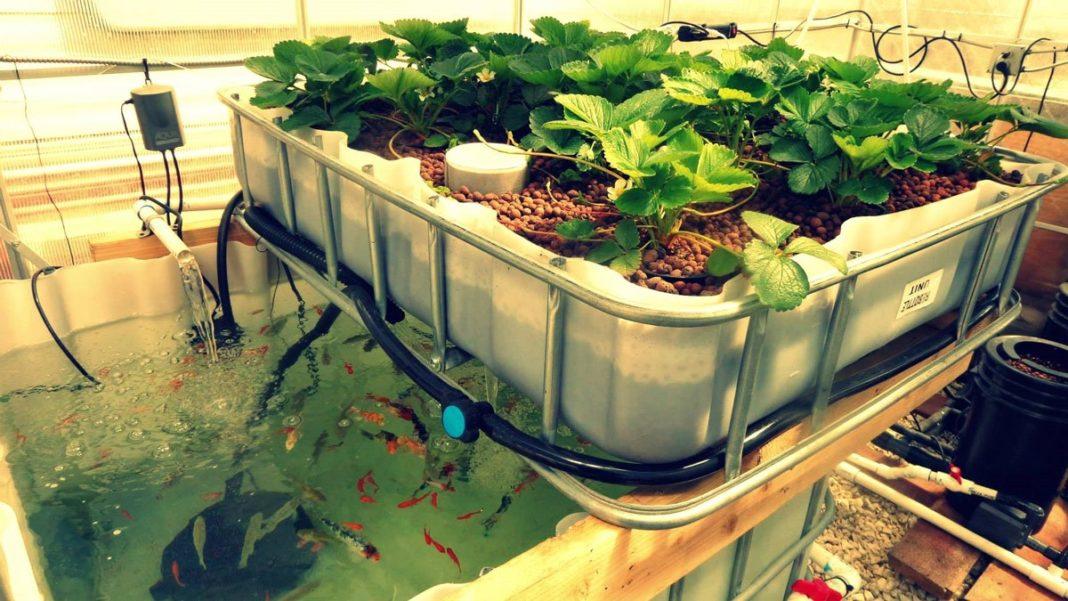 Cuenta México con alternativa sustentable para producir plantas
