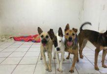 Este domingo Feria de Adopción canina en Ceconexpo