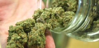 Aprueban nuevo amparo para uso de la mariguana