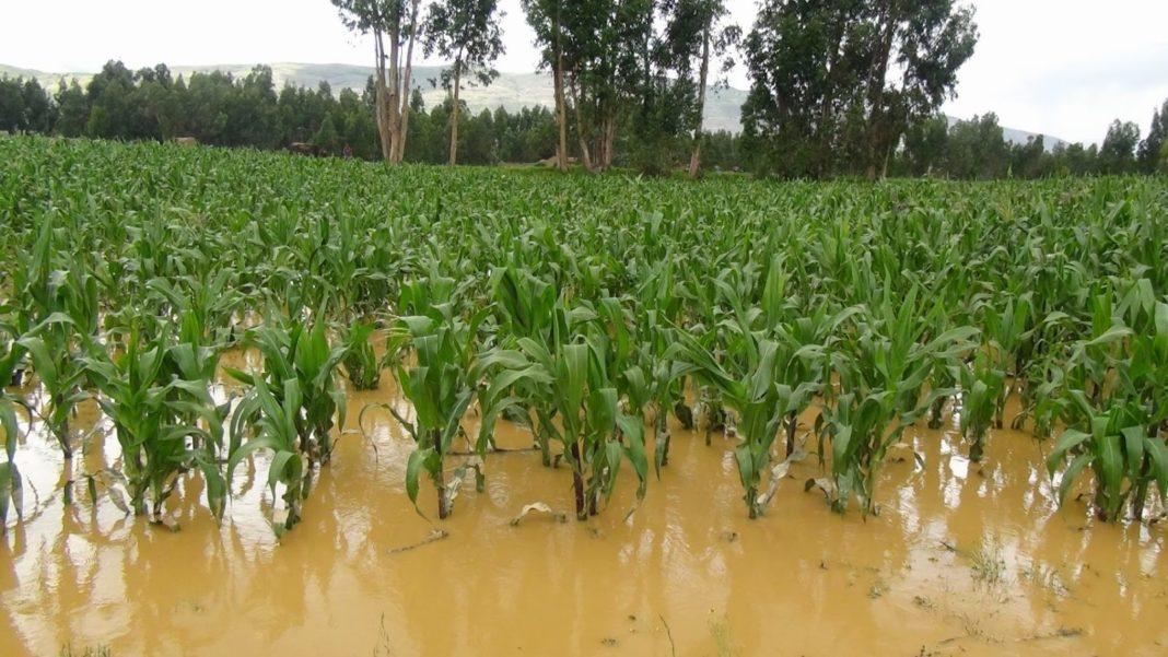 15 mil hectáreas afectadas en Michoacán por lluvias
