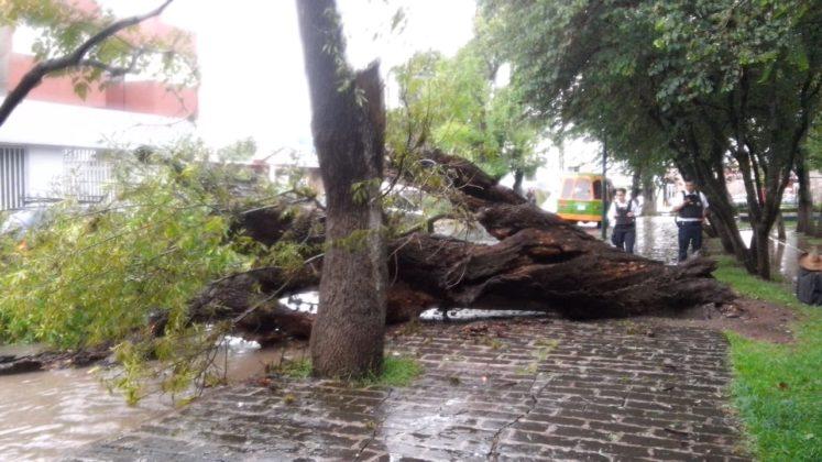 Lesionado por caída de árbol y autos varados, saldo de fuerte lluvia