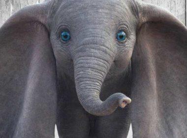 Disney lanza los carteles de 'Dumbo'
