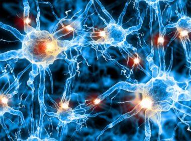 Hasta los 90 años, cerebro humano genera neuronas