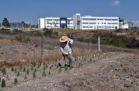 Usan en México tecnología agroecológica para combatir plagas