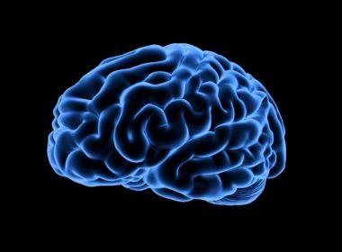 Aun dejando de beber el alcohol sigue dañando el cerebro