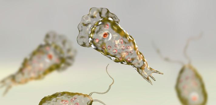 ¿Qué es la ameba 'come cerebros'?
