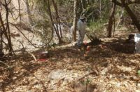 Encuentran 43 posibles restos óseos en fosa de Aquila, Michoacán