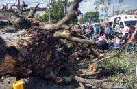 PC retira árbol caído en la avenida Ventura Puente
