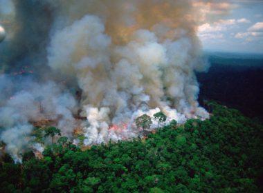 Piden artistas dar difusión a incendios en Amazonas