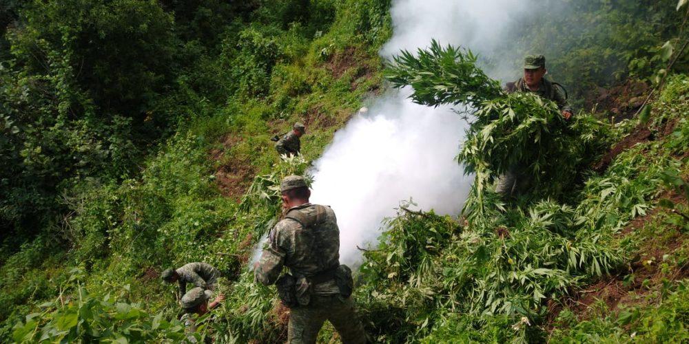 Aseguran 17 plantíos de marihuana en Michoacán