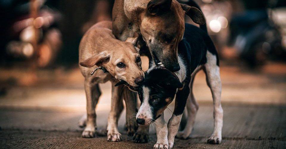 Cura rescata e incentiva adopción de perros callejeros durante misa