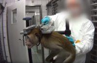 Destapan gran caso de maltrato animal