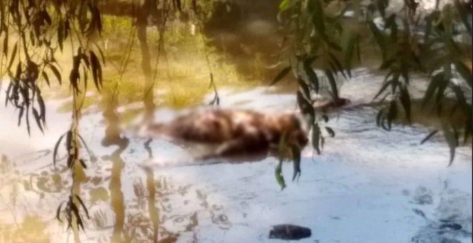 Encuentran cadáver en el Río Chiquito en Morelia
