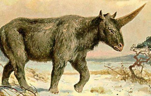 Descubren posible convivencia entre unicornios y homo sapiens