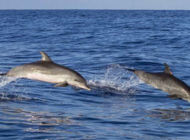 Detectan en México carne de delfín en latas de atún