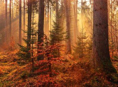 Empieza este martes el otoño