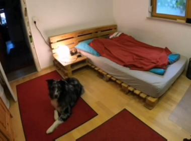 video viral fake perro