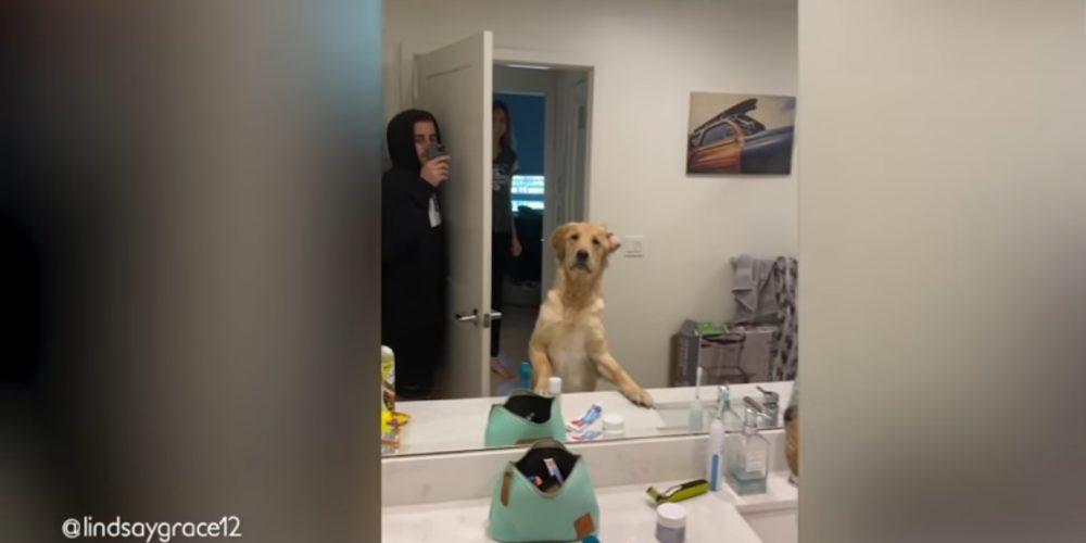 """Perro se sorprende al ver a su dueño """"dentro"""" del espejo"""