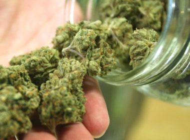 Cannabis recreativo ya para su aprobación
