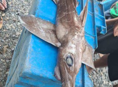 Capturan pez raro en Lázaro Cárdenas