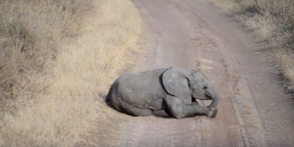 Dos bebés elefantes se roban el corazón de internet