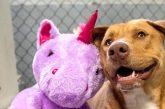 Perrito se roba Internet por su amor a un unicornio