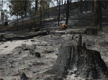 Morelia el municipio con más incendios en Michoacán