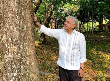 Sembrar árboles en Centroamérica son la solución ante la migración y el cambio climático AMLO