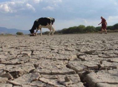 abuso de agroquímicos causa infertilidad del suelo