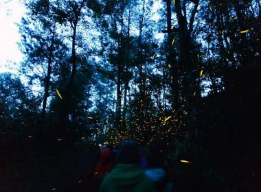 Michoacanos volverán a apreciar espectáculo de luciérnagas en Tlalpujahua