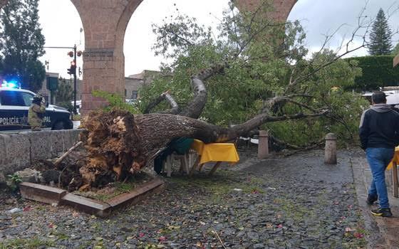 11 árboles se han caído en lo que va del año en Morelia