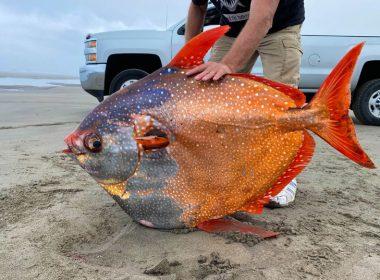 Descubren ejemplar de pez luna real