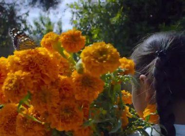 El tradicional viaje de la Monarca a Michoacán en voz de Will Smith