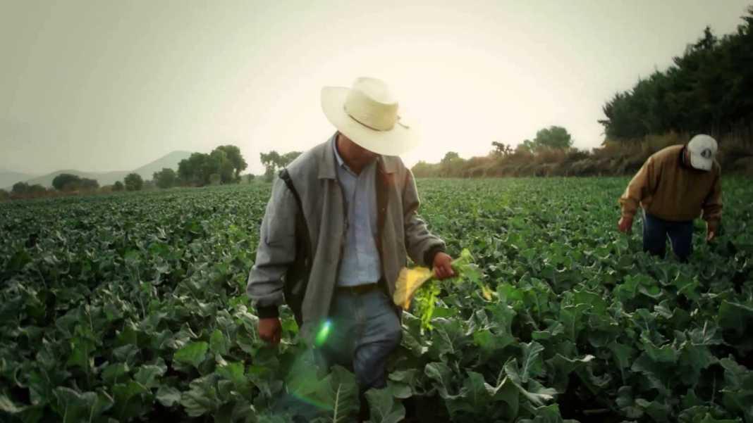 Necesario rectificar PEF a favor del campo, migrantes e inversión productiva